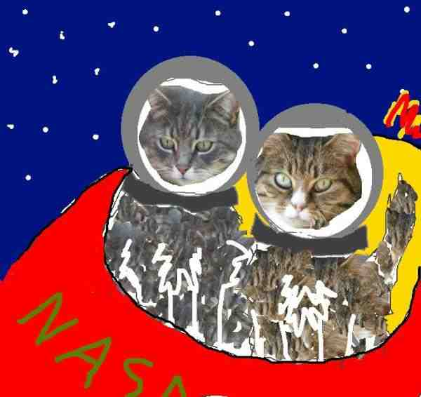 Slide of Cats in Space Hack (Liz Roberts)
